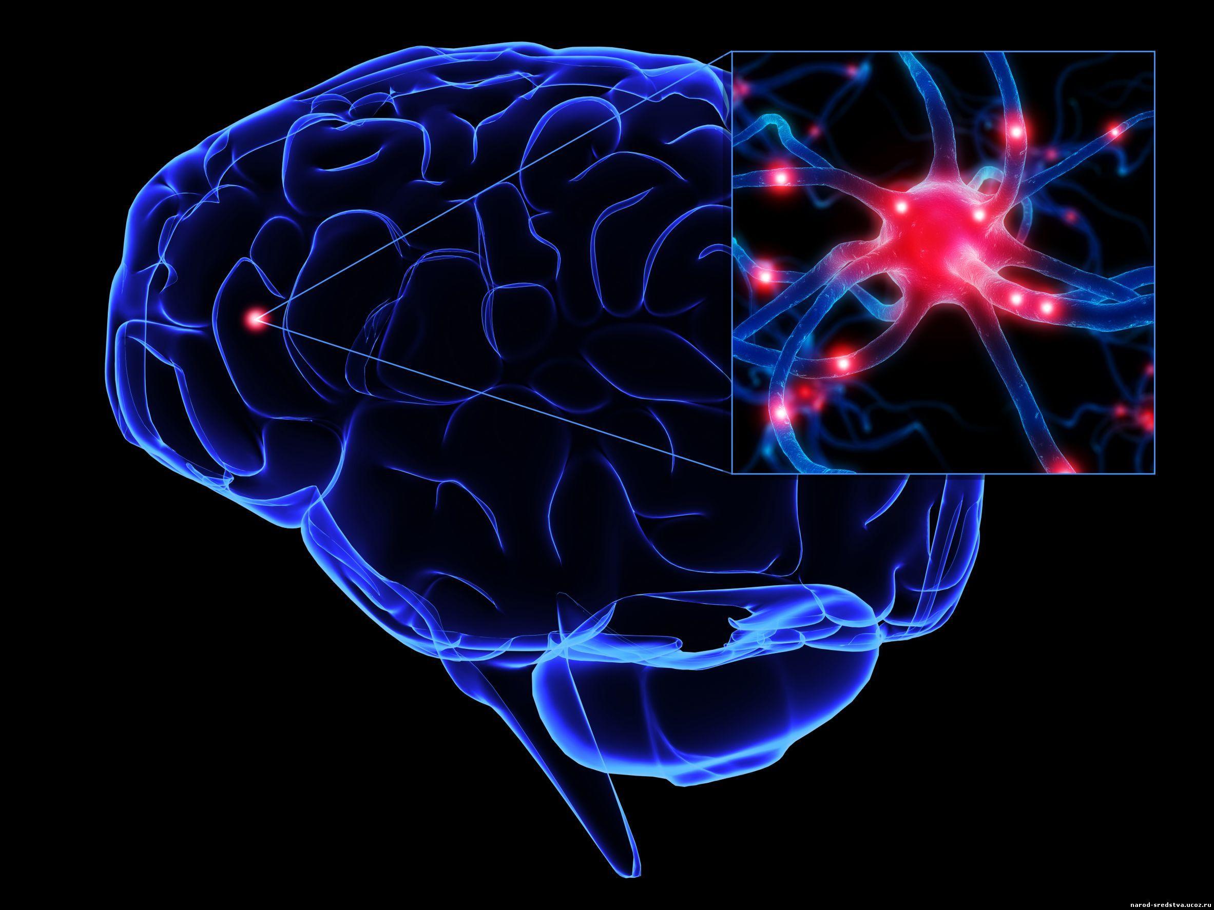 Клетка Нервная фото